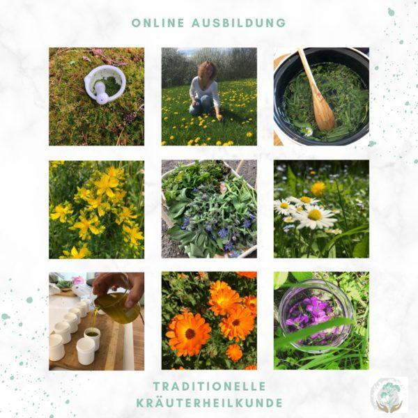 Online Ausbildung Traditionelle Kräuterheilkunde