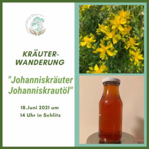Kräuterwanderung Johanniskraut