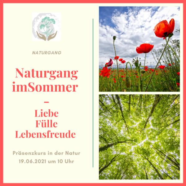 Naturgang im Sommer